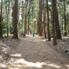 久しぶりに手賀の丘公園へ。アスレチックで子供の成長を確認。