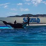 鴨川シーワールドのシャチのショーでずぶ濡れ 房総旅行2016